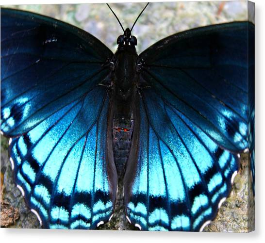 Canvas Print featuring the photograph Brilliant Butterfly by Candice Trimble