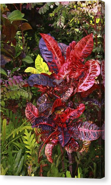 Brilliant Colors Of Leaves Canvas Print