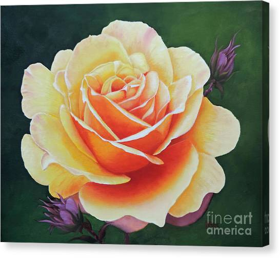 Brilliant Rose Canvas Print