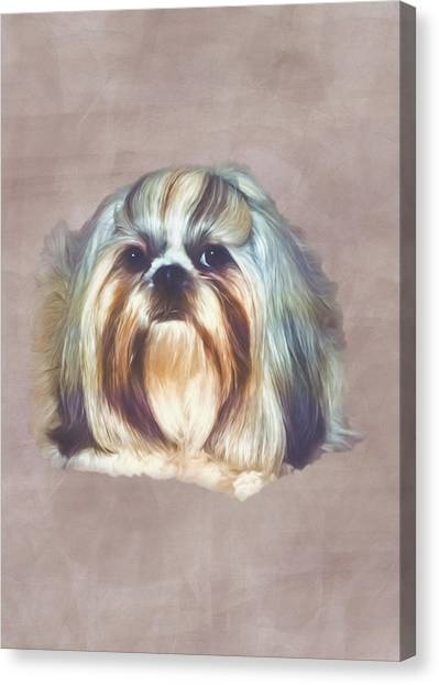 Shih Tzus Canvas Print - Brindle Shih Tzu by Delores Knowles