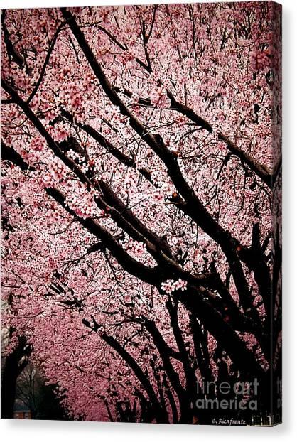 Bring On Spring Canvas Print