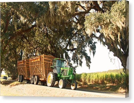Bringing Sugarcane Ton The Mill Canvas Print