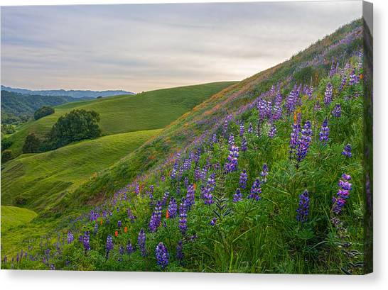 Contra Canvas Print - Briones Wildflowers by Marc Crumpler