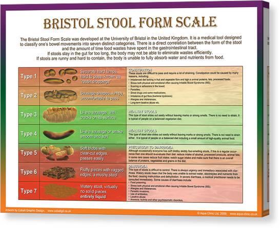 Bristol Canvas Print - Bristol Stool Form Scale by Galina Imrie