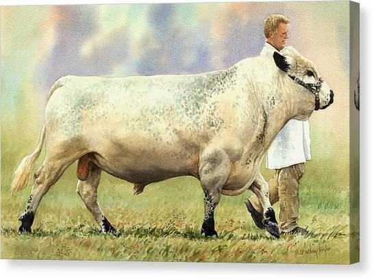 British White Bull Canvas Print by Anthony Forster