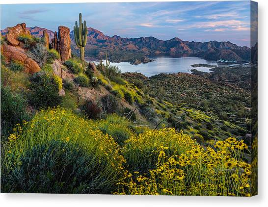 Sonoran Desert Canvas Print - Brittlebush Over Bartlett by Guy Schmickle