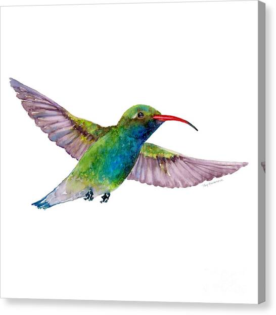 Broad Billed Hummingbird Canvas Print