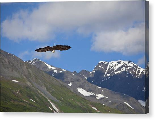 Broad Wings In The Mountains Canvas Print by Tim Grams