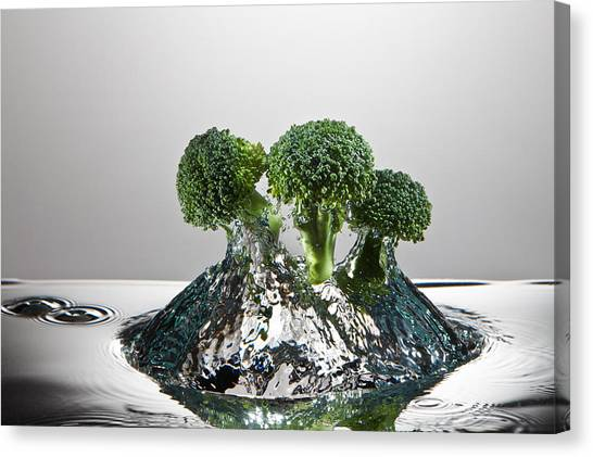 Broccoli Canvas Print - Broccoli Freshsplash by Steve Gadomski