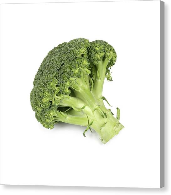 Broccoli Canvas Print - Broccoli by Geoff Kidd/science Photo Library