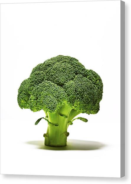 Broccoli Head On Whte Background Canvas Print by TS Photography