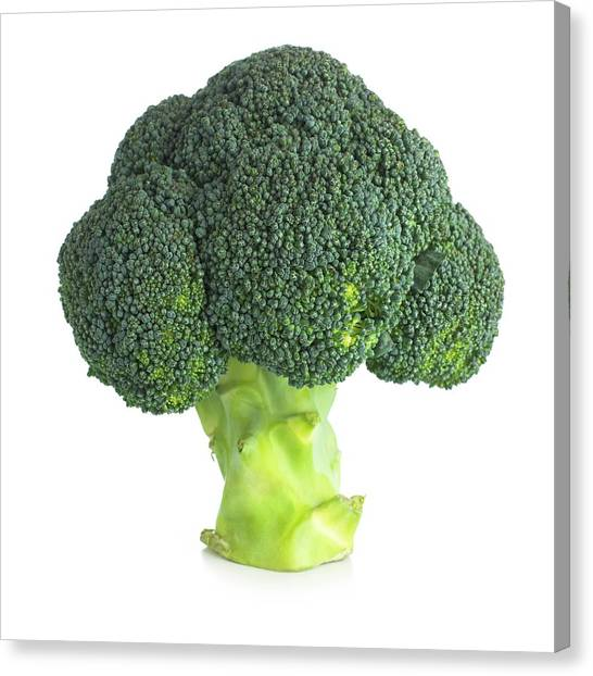 Broccoli Canvas Print - Broccoli by Science Photo Library