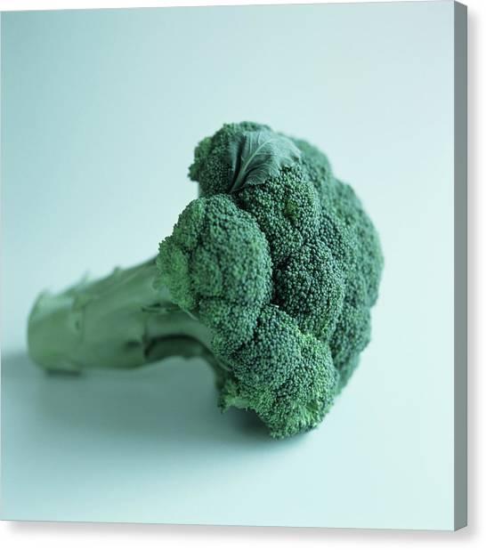 Broccoli Canvas Print - Broccoli Spear by Cristina Pedrazzini/science Photo Library