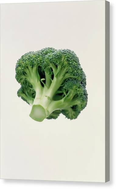 Broccoli Canvas Print - Broccoli by Sue Prideaux/science Photo Library