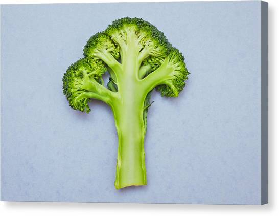 Broccoli Canvas Print - Broccoli by Tom Gowanlock