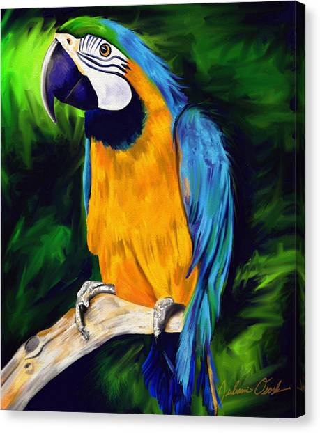 Brody Blue And Yellow Macaw Parrot Canvas Print