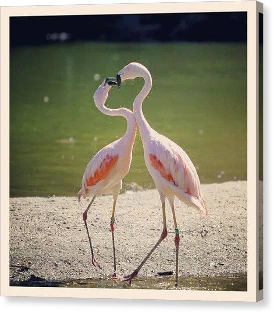 Flamingos Canvas Print - #bronx #zoo #newyork #bronxzoo by Rick Kuperberg Sr