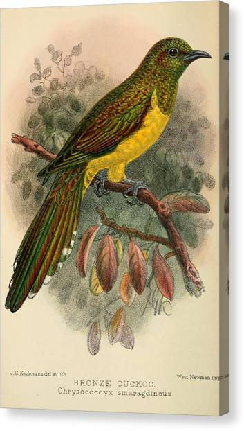 Cuckoos Canvas Print - Bronze Cuckoo by Dreyer Wildlife Print Collections