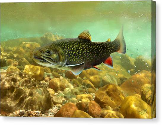 Brook Trout Canvas Print
