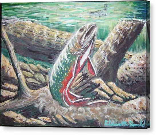 Brook Trouts Buff Ay  Canvas Print