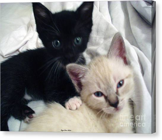 Brother N Sister Kittens Canvas Print