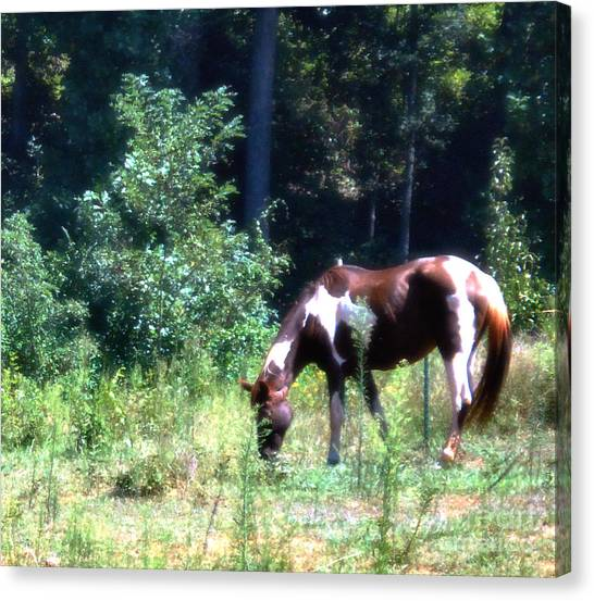 Brown And White Horse Grazing Canvas Print