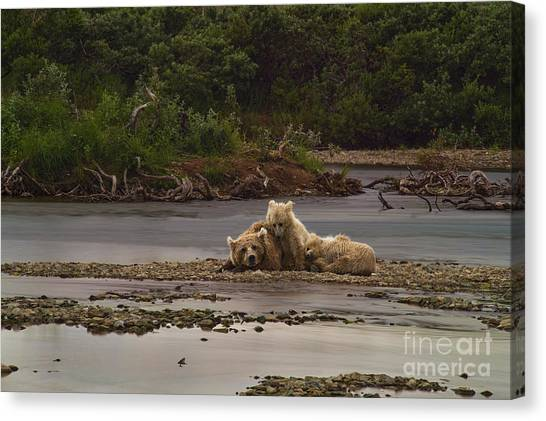 Brown Bear And Cubs Taking A Break From Fishing For Salmon Canvas Print by Dan Friend