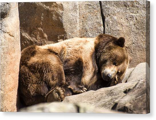 Brown Bear Asleep Again Canvas Print