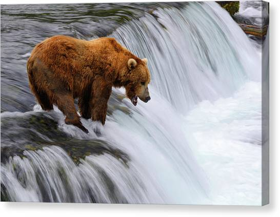 Brown Bear At Brooks Falls Canvas Print by Naphat Photography
