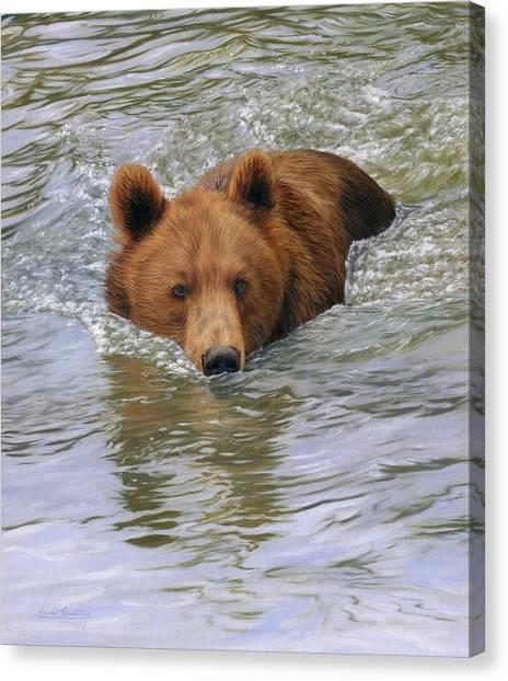 Brown Bears Canvas Print - Brown Bear by David Stribbling