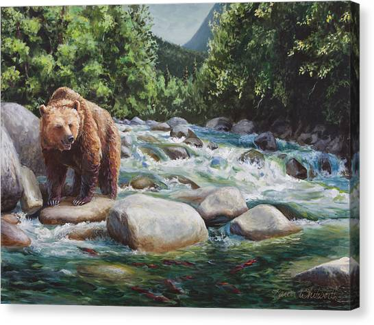 Brown Bear On The Little Susitna River Canvas Print