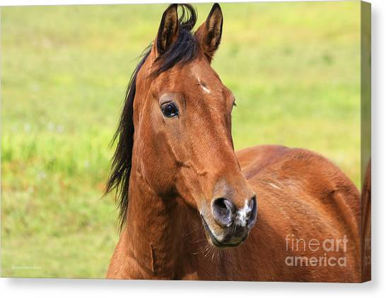 Brown Beauty Canvas Print