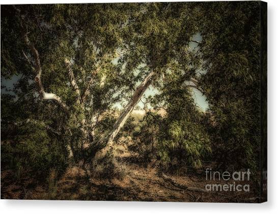 Brown Canyon Sycamore - Toned Canvas Print by Al Andersen