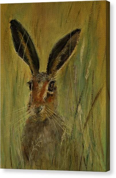 Brown Hare Miniature Canvas Print