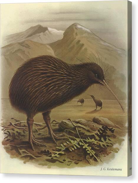 Kiwis Canvas Print - Brown Kiwi by Dreyer Wildlife Print Collections