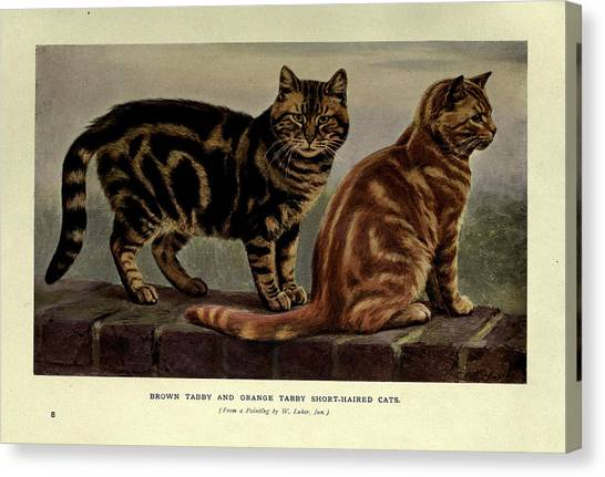 Manx Cats Canvas Print - Brown Tabby And Orange Tabby Cats by Philip Ralley