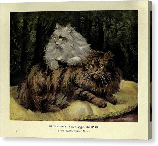 Manx Cats Canvas Print - Brown Tabby And Silver Persian by Philip Ralley