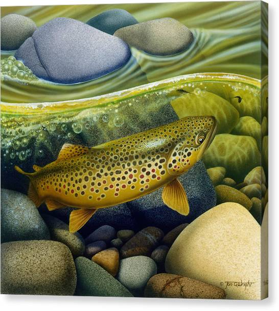 Angling Canvas Print - Brown Trout by JQ Licensing