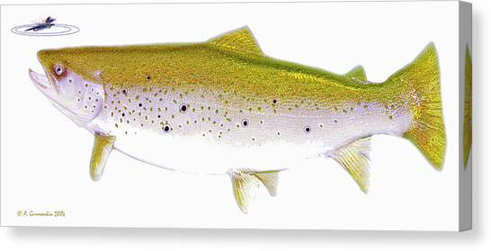 Brown Trout Rises To The Fly Digital Art Canvas Print by A Gurmankin