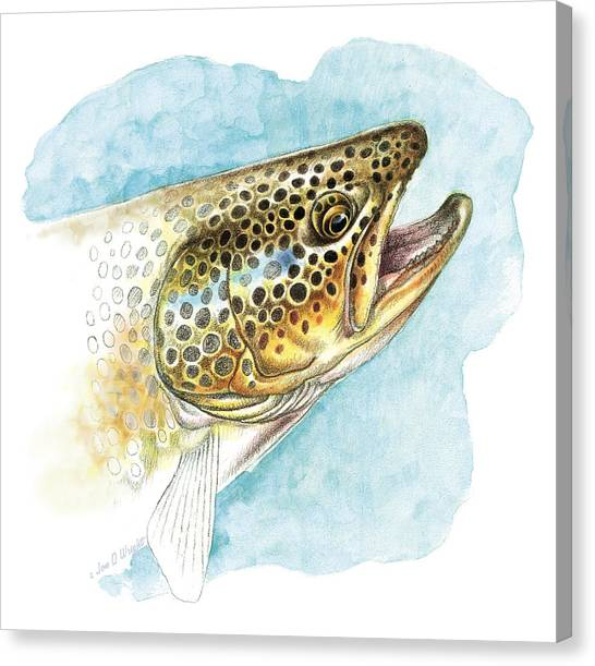 Trout Canvas Print - Brown Trout Study by JQ Licensing