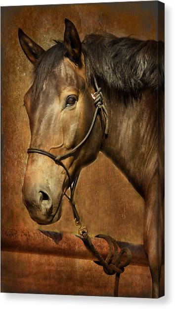 Brownie Canvas Print