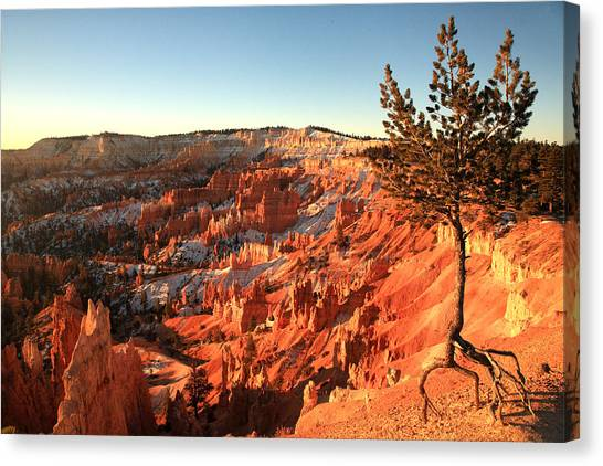 Bryce Canyon Canvas Print by Darryl Wilkinson