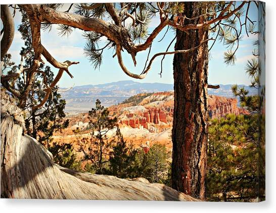 Bryce Canyon Through The Trees Canvas Print