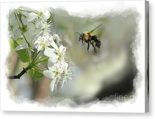 Bubble Bee Looking For Nectar Canvas Print by Dan Friend