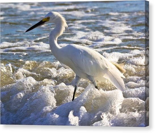 Bubbles Around Snowy Egret Canvas Print