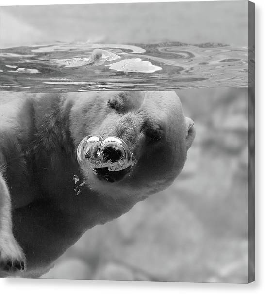 Polar Bear Canvas Print - Bubbles by C.s. Tjandra