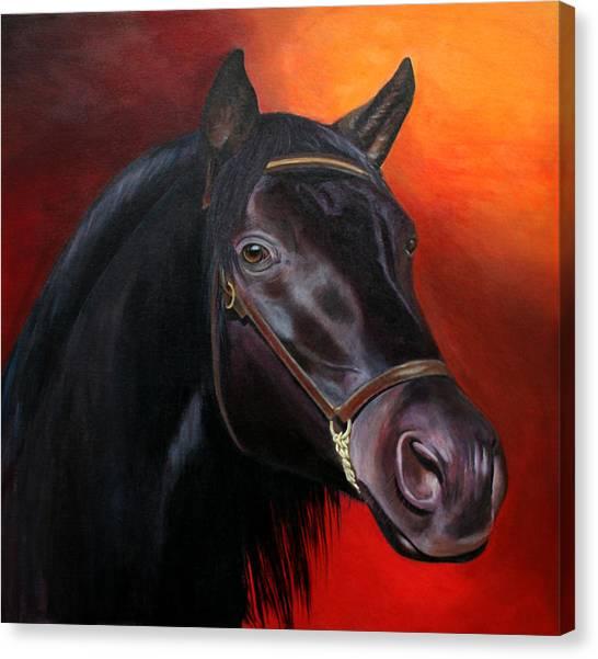 Canvas Print - Bucephalas - Horse Of Alexander The Great by Jill Parry