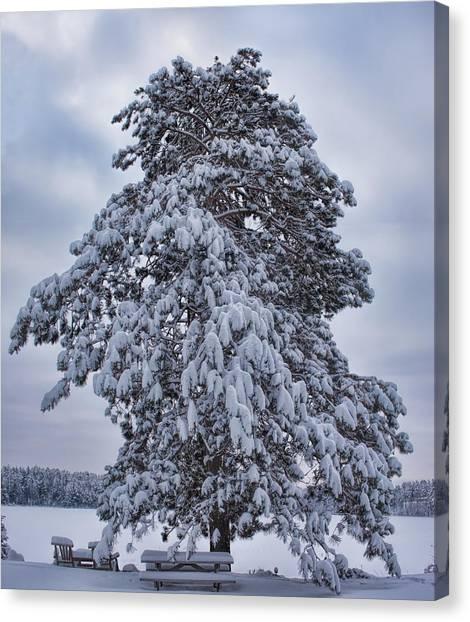 Buck Lake Flocked Pine Canvas Print