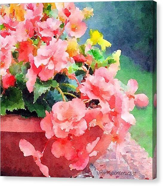 Impressionism Canvas Print - Bucket O Begonias by Anna Porter