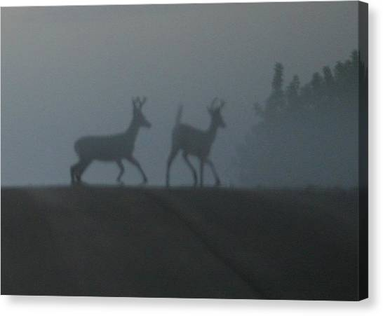 Bucks In Fog Canvas Print